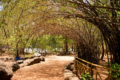nature landscape bamboo trees pattern bright outdoor vibrant day daylight shadow designs plants flowers foliage mumbai hiranandani nikond810 shadows roof curves covered bend serene fence stone path sketch colors vivid powai miniforest forest walk