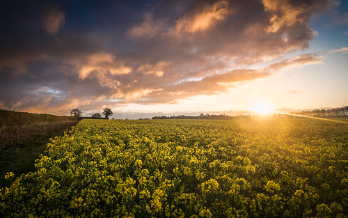 2015 918mm clouds countryside dawn daybreak dramatic em5 em5mark2 em5mk2 em5markii field flickr hampshire landscape lightroom lr6 m43 mzuiko mft microfourthirds olympus omd peaceful pr sky skyline sunrise weather yellow gmh hl