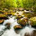 Little Pigeon River, Great Smoky Mountains National Park by James Duckworth