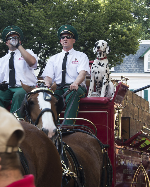 Clydesdales-1812