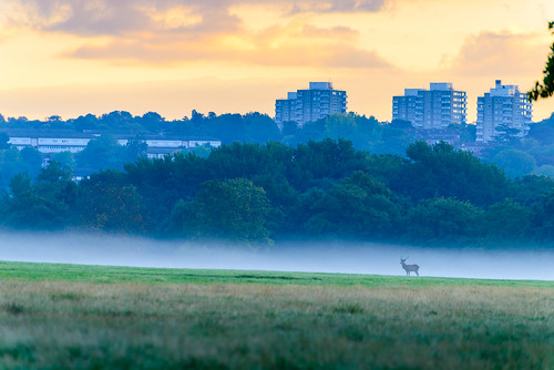 mist london sunrise richmondpark