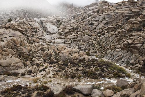 Rattlesnake Canyon during rain   by Joshua Tree National Park