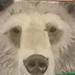 pan pastel bear by The Cheeky Terrapin