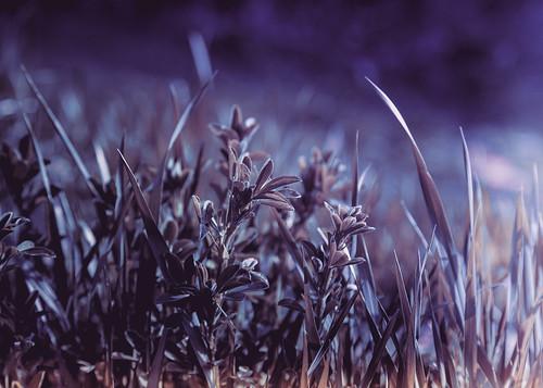 macro closeup purple infrared falsecolor