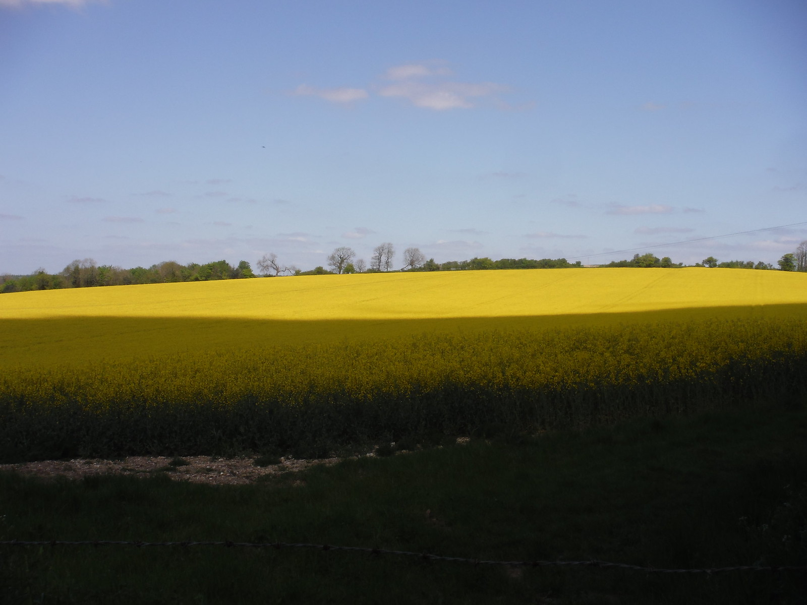 Sol y Sombra on Rapeseed Oil Field, Up Marden SWC Walk Rowlands Castle Circular