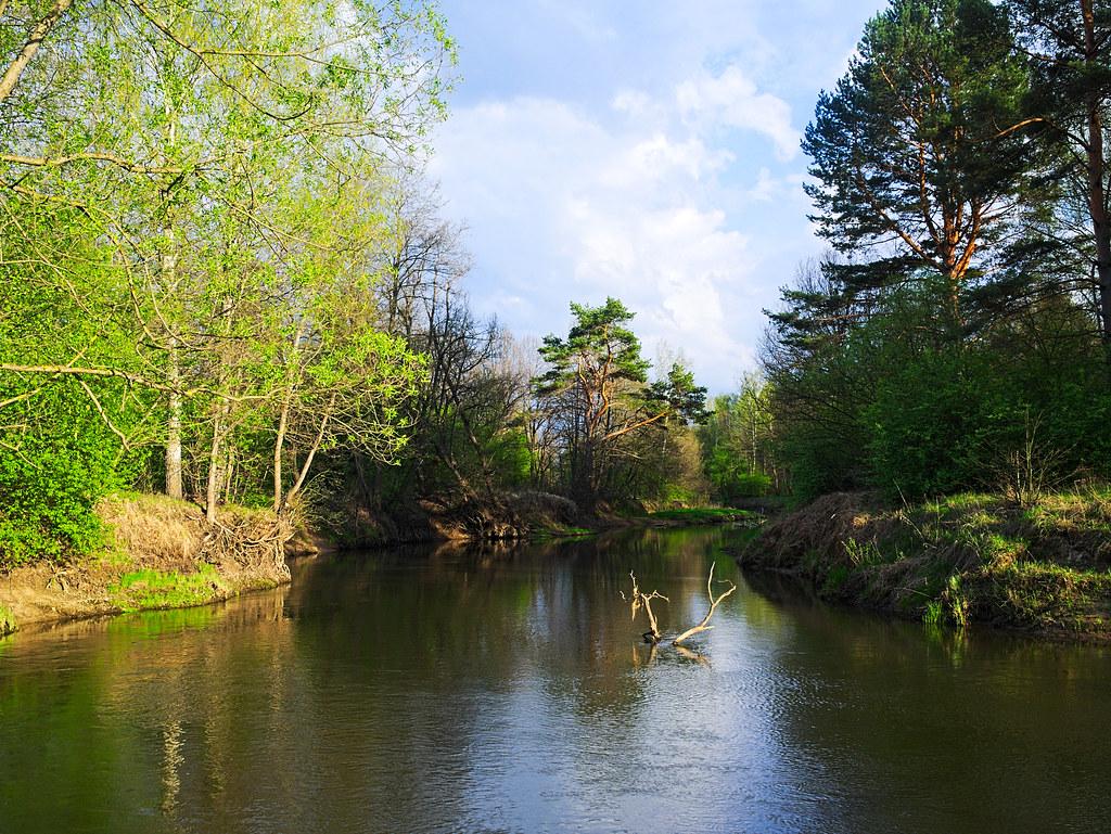 река жиздра фото отличие других