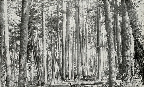 "Image from page 623 of ""American forests"" 