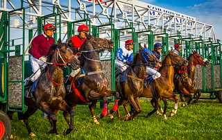 Horse races | by Peđa Martinović