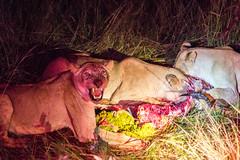 201504 - Zimbabwe - 0261.jpg