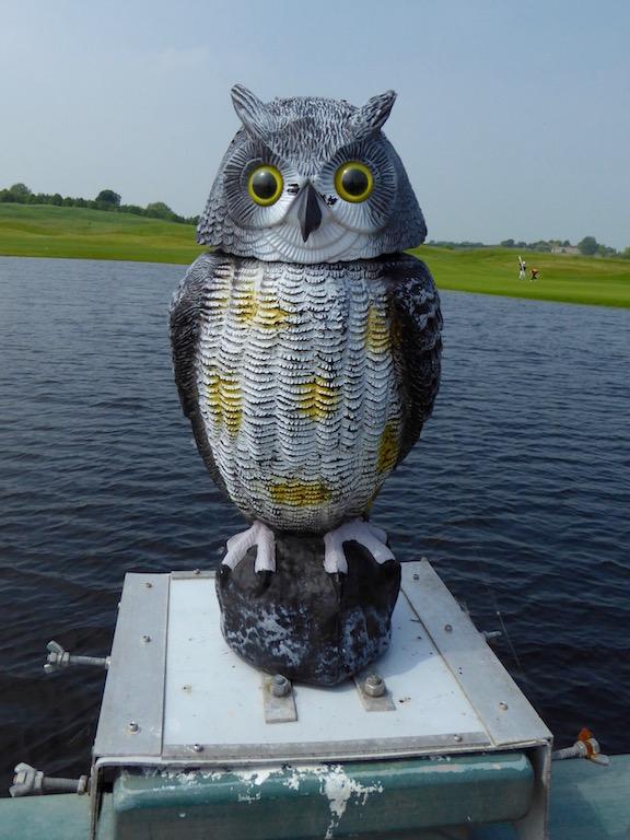 Owl on the golf course bridge Thame Circular walk