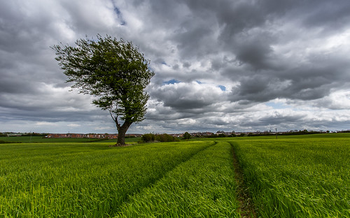 sky cloud tree field canon landscape countryside farmland fullframe manfrotto countydurham expsure thornley ef1740mmf4l lee09gnd canon6d hawkdog