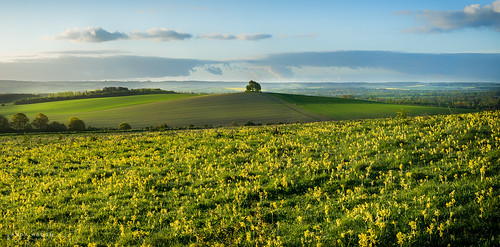 morning trees england panorama tourism sunshine landscape dawn spring unitedkingdom pano sony gb fields oxfordshire wallingford lightroom stiching wittenhamclumps southoxfordshire barrowhill a99 sonyalpha andyhough earthtrust slta99v andyhoughphotography