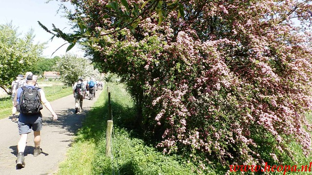 2016-05-11   Rhenen 25 Km (106)