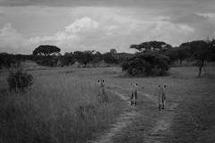 201504 - Zimbabwe - 0237.jpg
