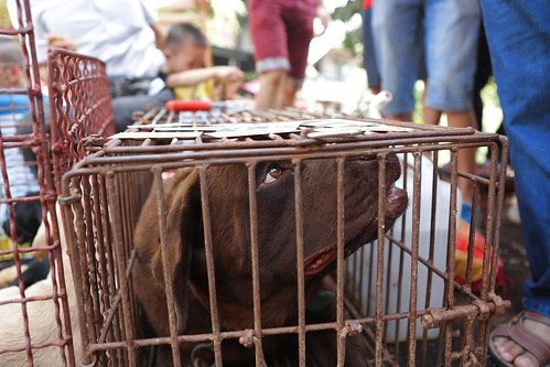 Dog in cage, Yulin festival 2015 | by Animals Asia