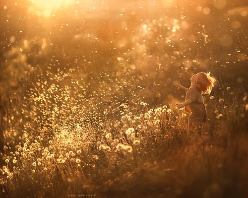 dandelion feeling..