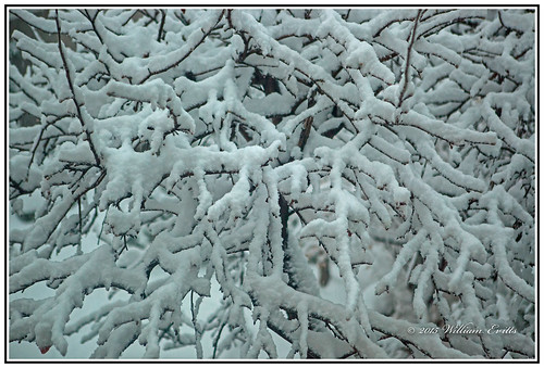 snow storm nature beauty canon design patterns visual