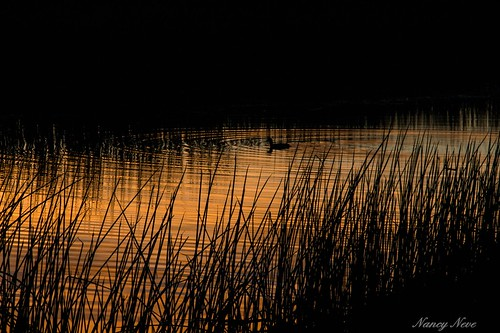 water reflections sunsets