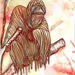 orangutan copie