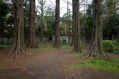 trees in Zenpukuji Park, Tokyo