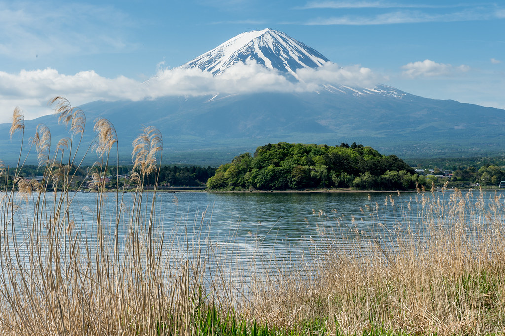 Lake Kawaguchi Spring