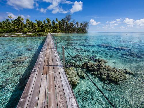 oceania océanie polynésie tuamotou fakarava