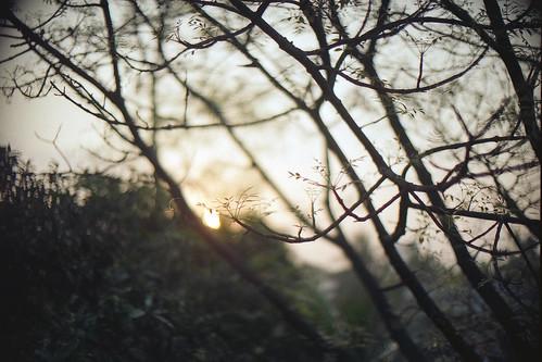morning winter light sun film nature beautiful analog sunrise golden fujifilm dhaka bangladesh tranquil olympusom10 buet zuiko50mmf14 morningrise fujicolorc200 dhakadivision rashidhall polashi epsonv330 sheikhshahriarahmed