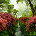 Isabella Plantation Richmond Park London by Simon Hadleigh-Sparks (International Garden Photographer of the Year IGPOTY 9 2016 Finalist) by Simon Hadleigh-Sparks