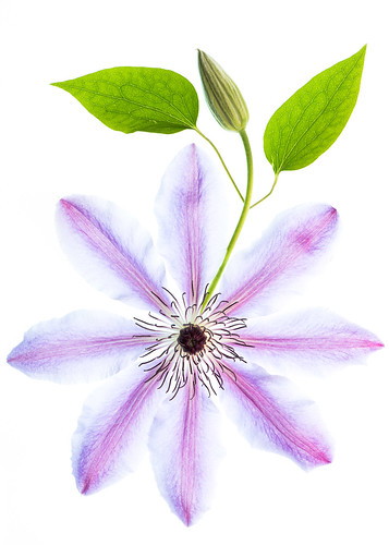 Macro - Flora, Fauna, bits and bobs