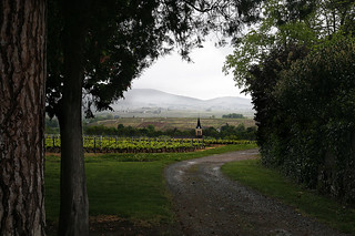 A church in the wineyard