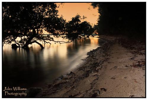 contrast sunrise dawn sand waterfront outdoor border australia mangrove serene photoborder