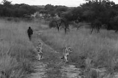 201504 - Zimbabwe - 0226.jpg