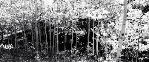 blackandwhite abstract tree fall texture rio forest landscape grande us colorado unitedstates outdoor united pass states aspen cumbres antonito