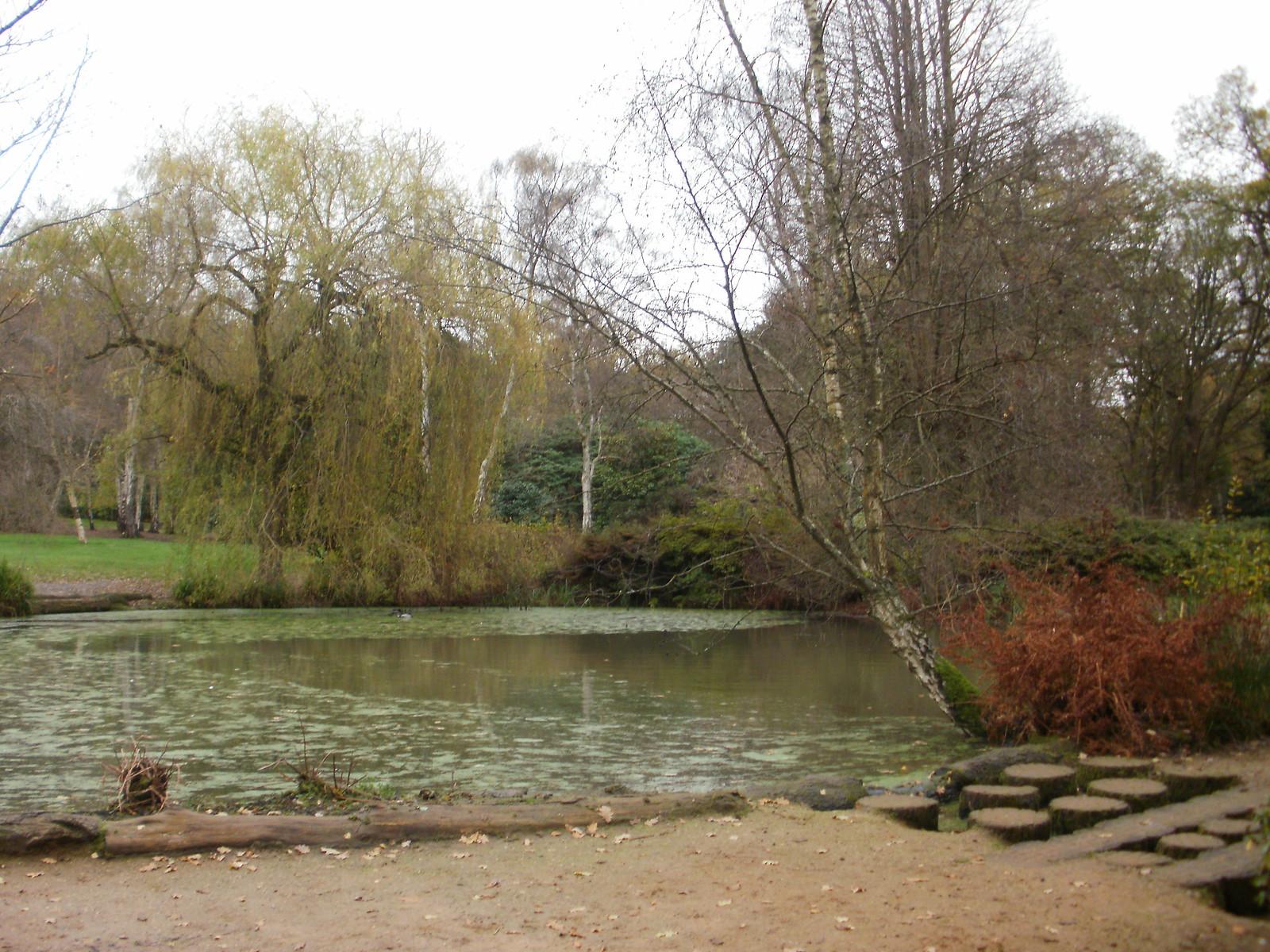 Still Pond Richmond Park OLYMPUS DIGITAL CAMERA