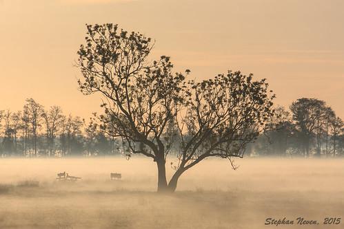 light sky orange mist holland tree netherlands dutch fog landscape outdoor postcard polder
