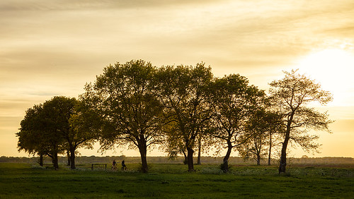 trees sunset sun netherlands cyclists golden bomen outdoor groningen gouden drenthe fietsers onlanden reinasmallenbroek zondersgang