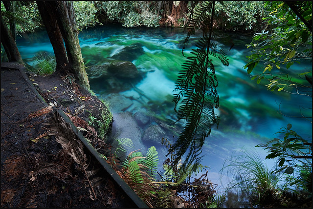Blue Spring : Te Waihou Walkway