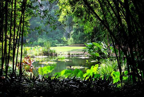 huntingtonlibraryandgardens pasadenaca usa landsscape japanesegarden ponds ducks lilypads dgrahamphoto gardens sunrise lilypond backlighting