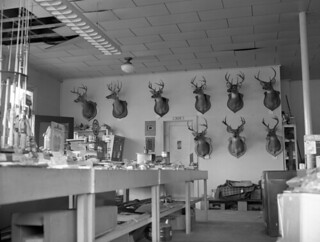 Interior view of a sporting goods store in Tallahassee