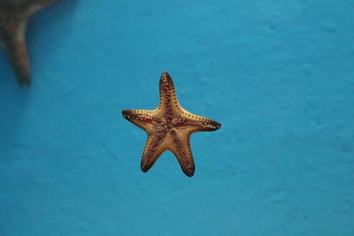 海星 Starfish | by Chi-Hung Lin