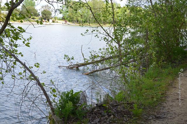 Au bord du lac, au bord du chemin