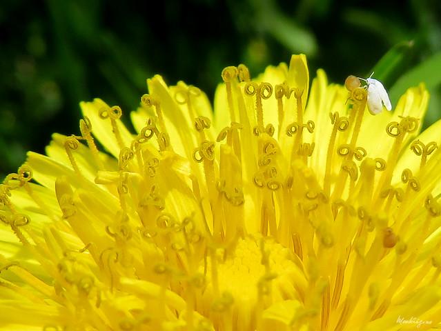 Beautiful Weed - Mauvaise herbe, mais jolie