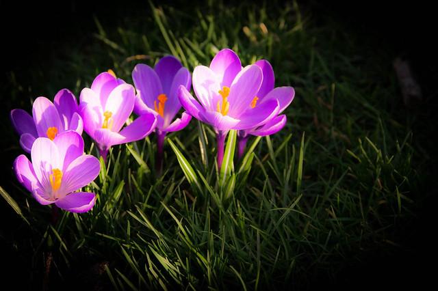 springtime...adventure time