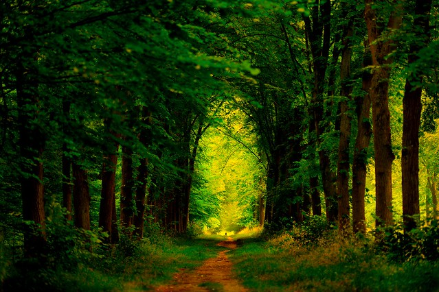 """""""Don't be afraid of an endless road, but the road with an end!""""  M. M. Ildan"""