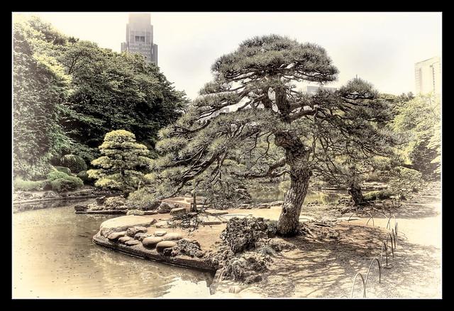 Tokyo J - Shinjuku Gyoen Park Japanese garden 02