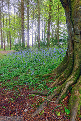 The woodland beckons.