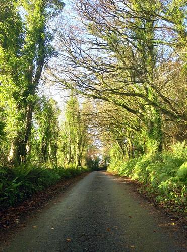 wood autumn ireland irish leaves forest scenery path cork foliage lane newmarket 2015onephotoeachday