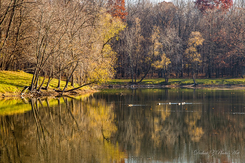morning light reflection bird water forest illinois pond ducks autumncolors cookcountyforestpreserve canonef24105mmf4lisusm potawatomiwoods wheelingillinois canoneos6d lakepotawatomi autumn2015