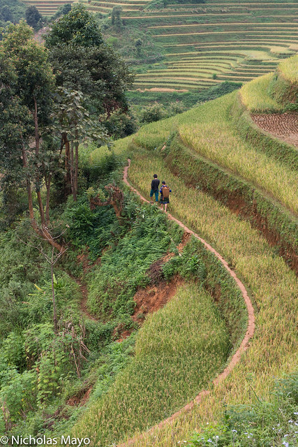 Hmong Farmers Walking To Their Fields