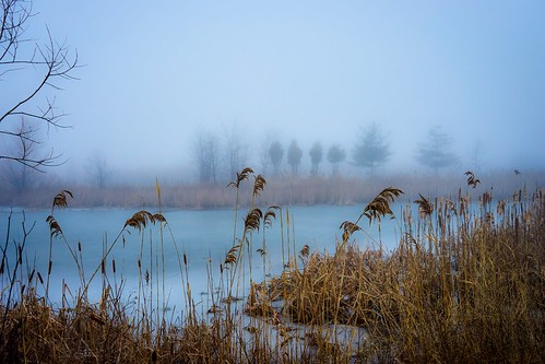 wild nature pond foggy mist photoshopexpress meadowland conservation sony a7m2 sonyfe2870mm a7ii